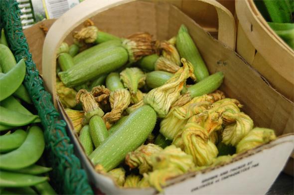 20090721---Young-zucchini.jpg
