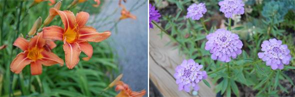 20090727---Flowers.jpg
