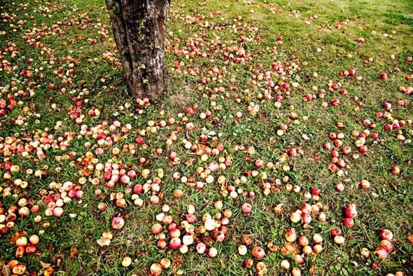 20091003-gtatripping-caves-apples.jpg