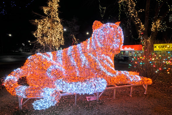 Tiger Lights at Christie and Bloor