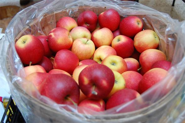 20100129---Apples.jpg
