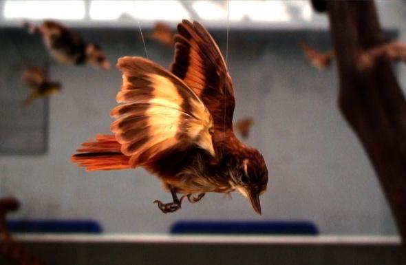 John Greyson film