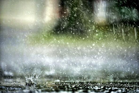 20100916-rain_chewie_puddle.jpg