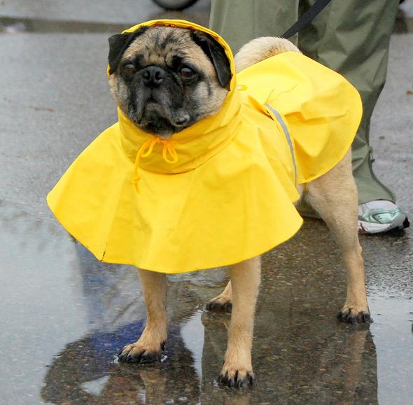 rain suit dog