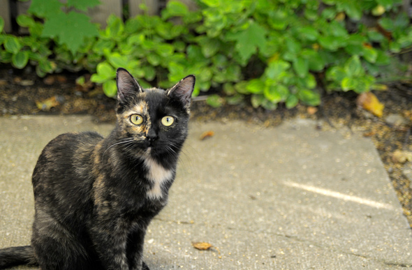 Feral Cat Rescue Toronto