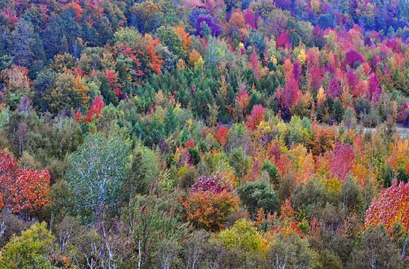 fall colour GTA
