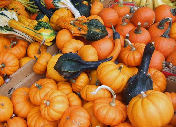 Pumpkins Toronto