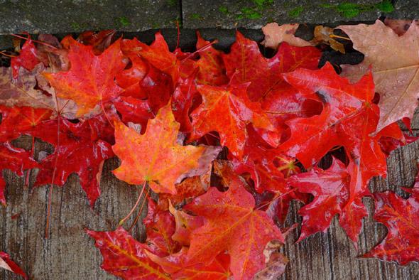 20101101-fall7.jpg