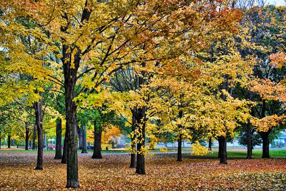 20101101-fall9.jpg