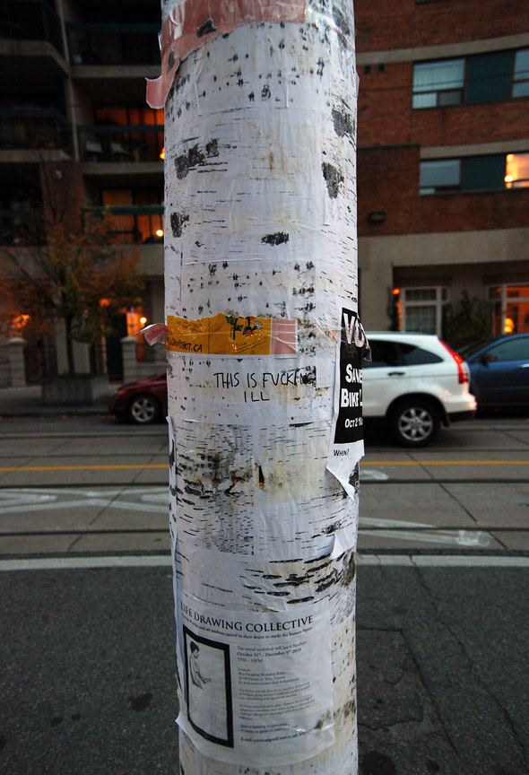 Birch Bark Hydro Pole Toronto