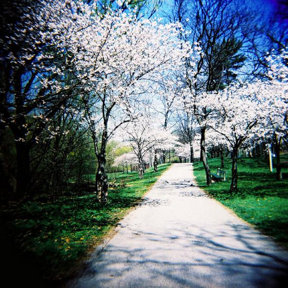 Holga Blossoms