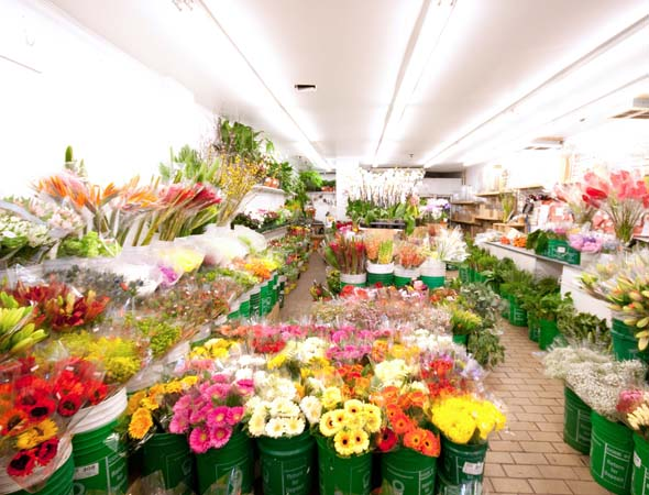 Flowers Davenport Toronto