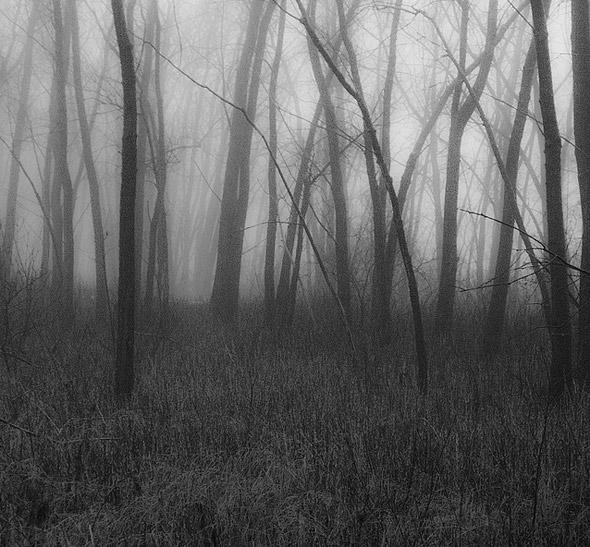 201147-fog-ee.jpg
