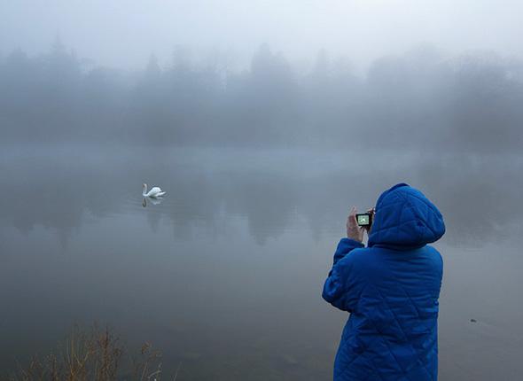 201148-fog-high-park-swan.jpg
