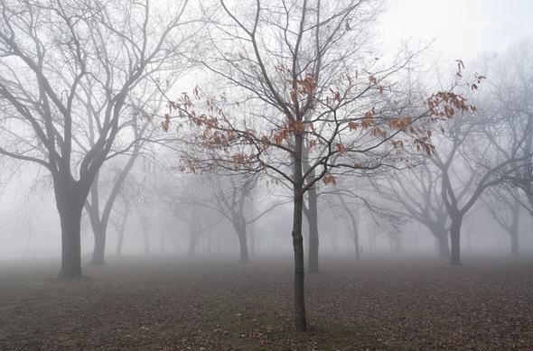 201149-fog-leaves-590.jpg