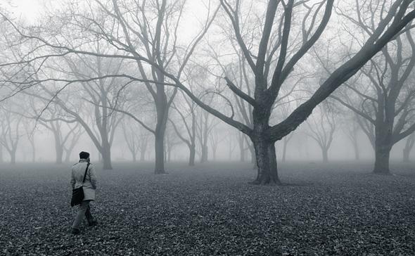 201149-fog-walk-590.jpg