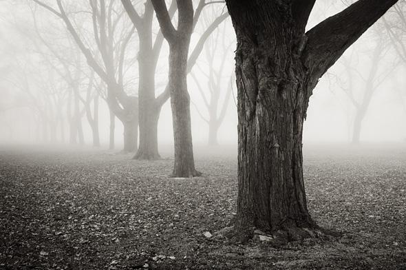 201149-sepia-trees-590.jpg