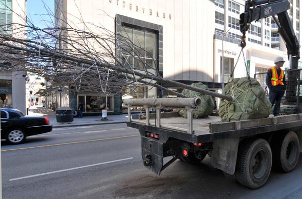 201155-bloor-tree-truck-install.jpg