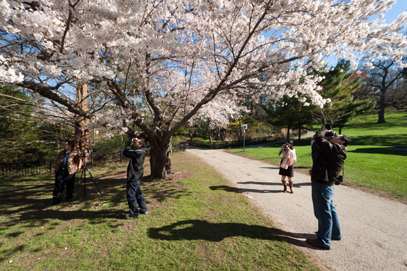 Spring High Park