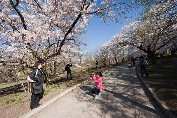 High Park Cherry Blossoms 2011