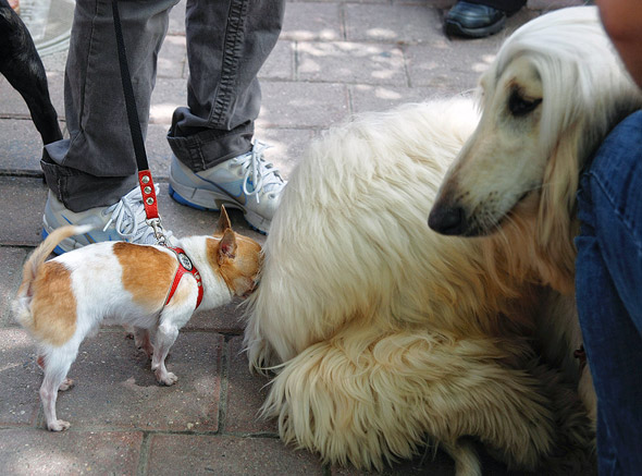 Woofstock Toronto Dogs
