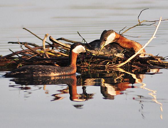 nature, birds, lake