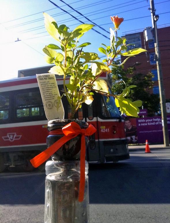 2011825-street-no-trees.jpg