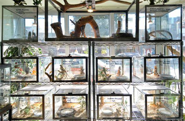 Lizard Store Toronto