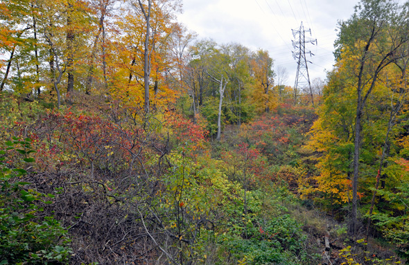 Crothers' Woods