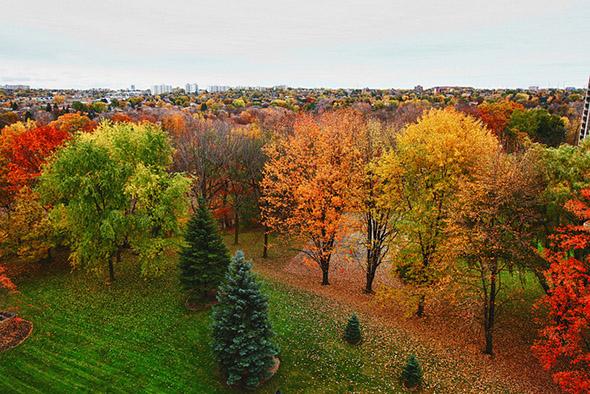 toronto, fall, november