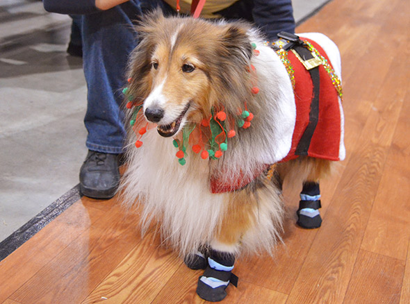 Winter Woofstock 2011