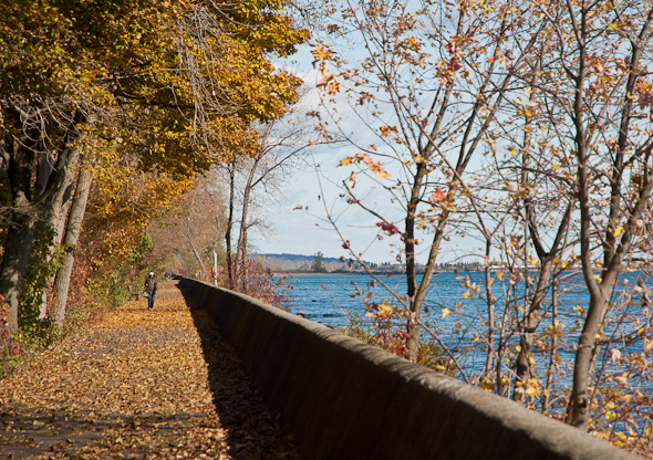 Toronto Islands Autumn