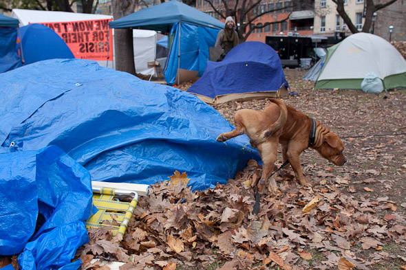 Occupy, Toronto, Evict