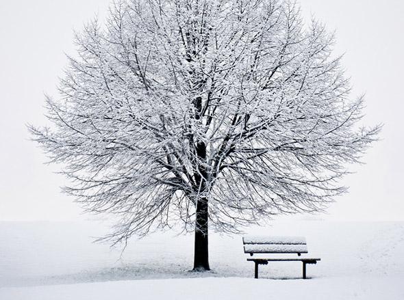 tree, bench, snow