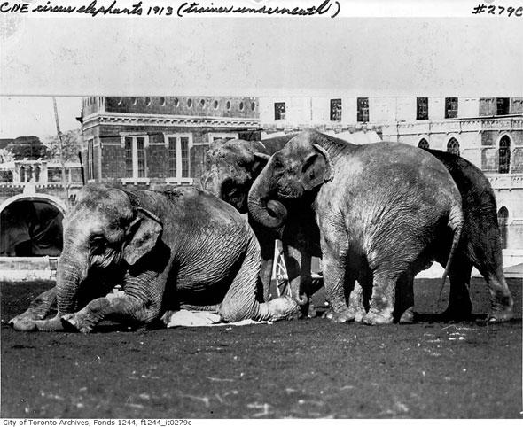 toronto CNE performers circus elephants