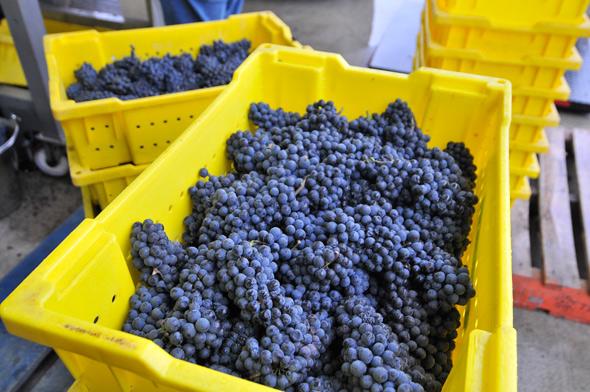 Hidden Bench Winery