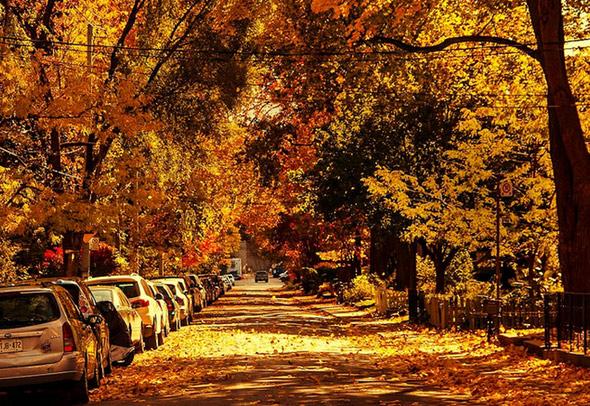 Fall Toronto