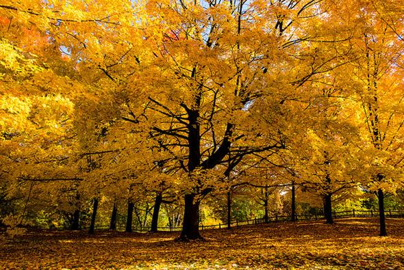 2012119-fall13.jpg