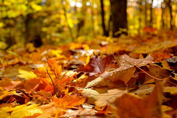 2012119-fall16.jpg