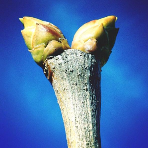 #SpringTO Instagram