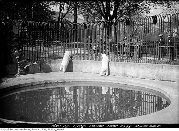 toronto riverdale zoo