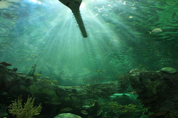 toronto ripley's aquarium