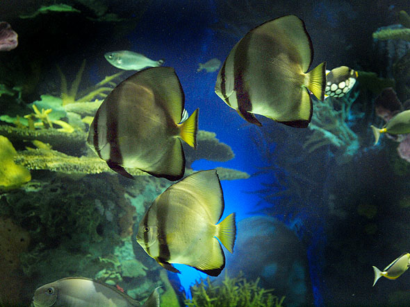 Ripleys Toronto Aquarium