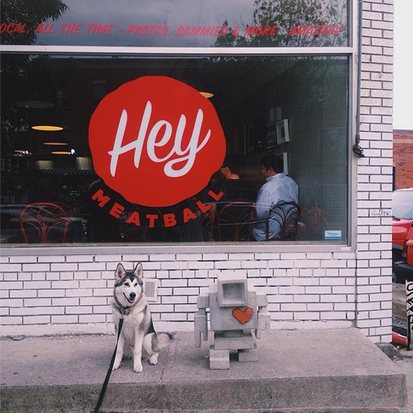 Toronto Dogs of Instagram