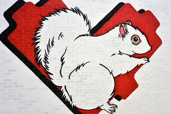 white squirel mural toronto