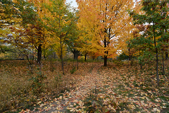high park fall colours